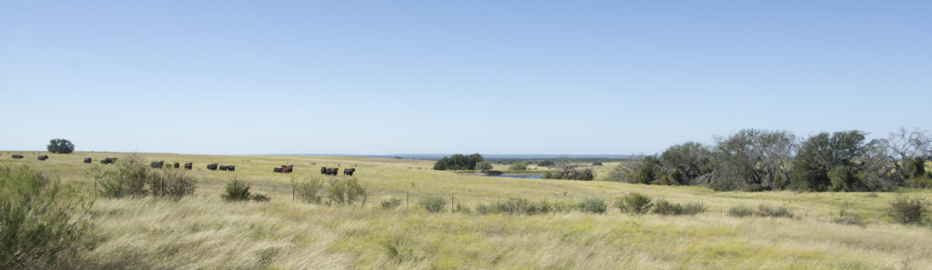 10 Essential Tips for Buying Rural Property
